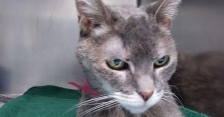 Cette chatte de 15 ans attendait désespérément d'être adoptée, jusqu'au jour où...