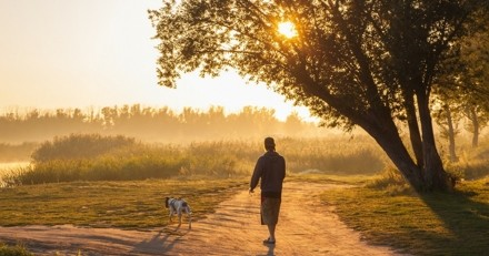 Promenade de votre chien : quels sont les meilleurs moments de la journée pour la sortie ?