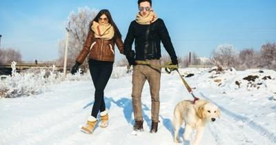 Les 8 règles de la promenade avec son chien en hiver