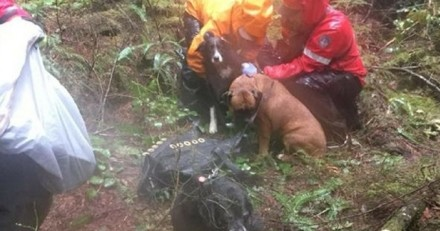 Coincée dans la forêt pendant trois jours, elle doit sa survie à ses chiens