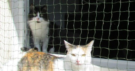 Cette start-up sauve des chats grâce à une idée simple à laquelle personne n'avait pensé !