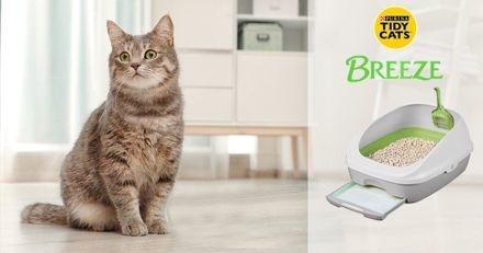 « Litière révolutionnaire » : les lecteurs de Wamiz ont testé pour vous la litière Tidy Cats Breeze