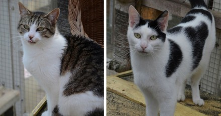 Après avoir échappé à l'euthanasie, cette chatte et son petit attendent une famille pour la vie