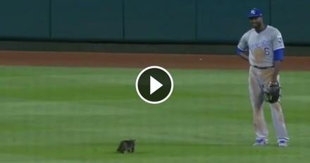 Un chaton interrompt un match de baseball et fait fondre tout le stade (Vidéo)