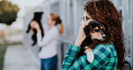 Maltraitance animale : le collectif ESPOAr s'inquiète du devenir des associations sans refuge