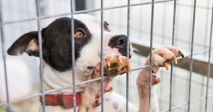 Les chiens aboient trop, le refuge est convoqué au tribunal !