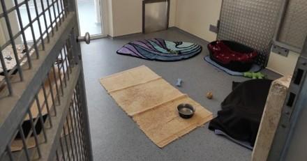 Un refuge partage la photo d'un chenil vide : l'histoire qui se cache derrière est tragique
