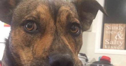 Ce chien sauvé d'une mort certaine est le pro des sourires (Photos)