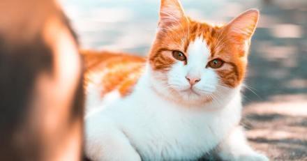 Vous voulez communiquer avec votre chat ? Testez cette méthode prouvée scientifiquement !
