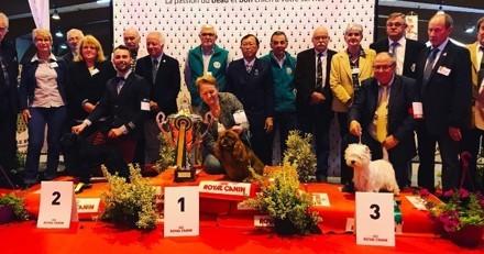 Retour sur la première exposition internationale de la Société Canine Bretonne à Rennes