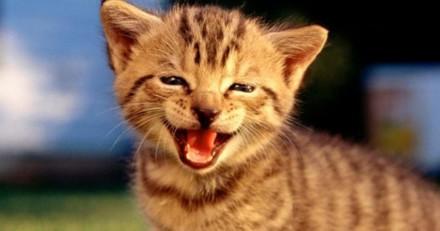 """Les Etats-Unis ferment leur """"abattoir à chatons"""""""