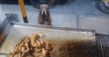 Chaque soir, des chiens errants se retrouvent au même endroit pour une raison bien précise