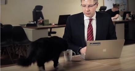 Ce chat interrompt un maire en pleine interview et lui vole la vedette