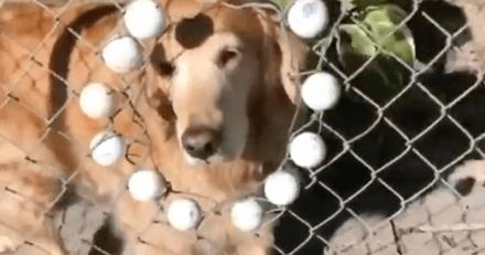 Elle joue au golf et repère une chose étrange au fond du terrain : elle éclate de rire en comprenant la blague (vidéo)