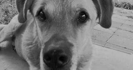 """""""Le silence est assourdissant dans le refuge"""" : tout un pays est sous le choc du sort de ce chien"""