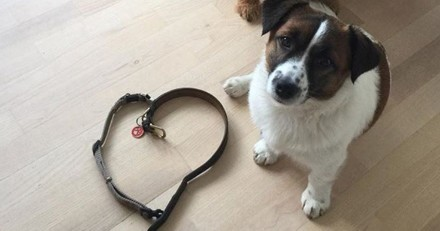 Ces chiens posent sans leurs colliers pour honorer la mémoire d'un chiot étranglé