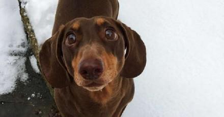 En plein confinement avec leur chien, un détail les fait paniquer : le verdict du vétérinaire est culte
