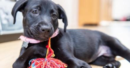 Ils se rendent dans un refuge et décident d'adopter un chien qui a 6 pattes !