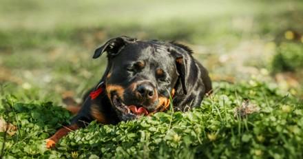 Une femme de 34 ans refuse d'abandonner son chien malgré une demande des autorités