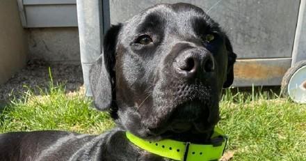 Elle entre dans le bureau du vétérinaire avec sa chienne : il lui révèle un grand secret !