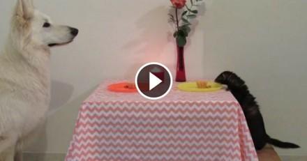 Pour la Saint-Valentin, ce chien prépare une magnifique surprise à un furet (Vidéo du jour)