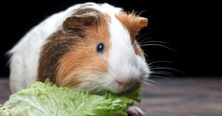 Ce magasin offre de la salade aux rongeurs de ses clients !