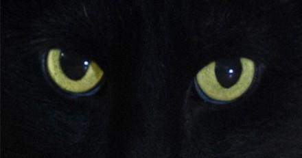 Découvrez le nouveau Salem dans le reboot de Sabrina l'apprentie sorcière