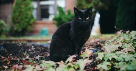 Sabrina sur Netflix : voici pourquoi Salem le chat noir ne parle pas !