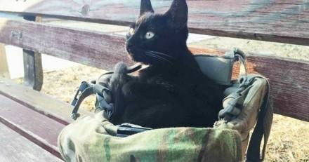 Salem, le chat errant qui avait choisi son maître