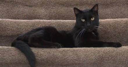 Elle retrouve son chat disparu et est horrifiée de découvrir ce qu'il a subi