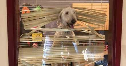 Ce chien suit les enfants de ses maîtres au collège, il est convoqué dans le bureau du principal