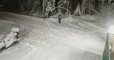 Un enfant joue à cache-cache alors qu'un loup s'approche : son chien fonce et fait l'impensable