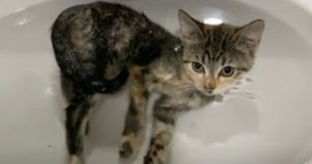 Un chaton rescapé se faufile dans la salle de bain : le cœur de son humain fait un bond !