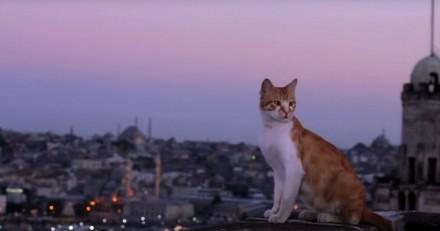 Cinéma : le film « Kedi, des chats et des hommes » : un hommage aux petits sultans félins d'Istanbul