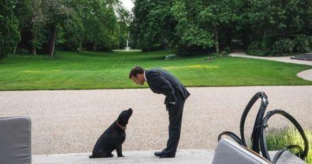 """""""Mobilisez-vous contre l'abandon"""" : Emmanuel Macron partage d'adorables photos de son chien Nemo !"""