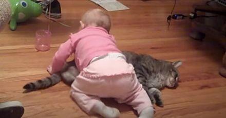 Son bébé se jette sur le chat, personne ne s'attendait à une telle réaction (vidéo)