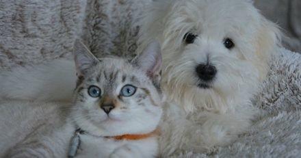 Russie : en cas d'endettement, les animaux domestiques ne pourront plus être enlevés à leur maître