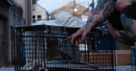 Ce chat devait être euthanasié à cause d'une patte cassée : un petit détail va tout changer