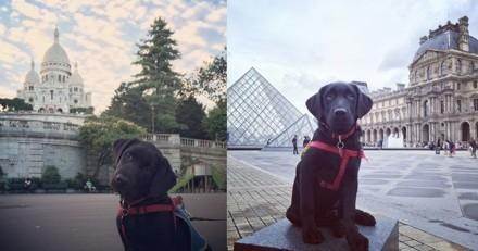 C'est la semaine nationale du chien guide !