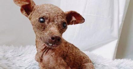Ce chien qui ressemble à une momie a eu droit à une métamorphose épatante !