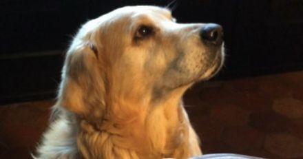 Laurent Delahousse annonce la mort de son chien et émeut les Internautes