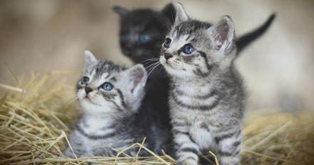 Royaume-Uni : Une famille effondrée après l'empoisonnement de ses quatre chatons à l'antigel