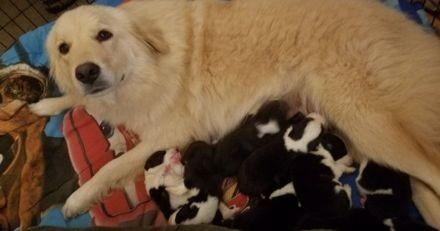Une chienne a finalement pu devenir mère juste après la perte de ses 7 chiots dans un incendie