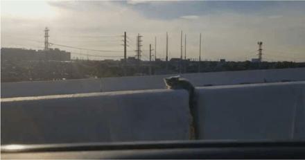 Sur l'autoroute, il voit une ombre entre les deux voies et fait immédiatement demi-tour (et il a bien fait !)