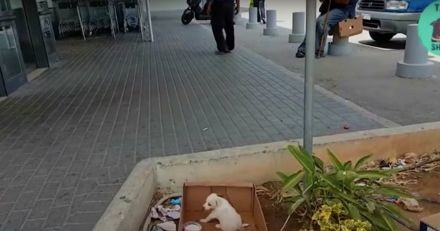 Un chiot abandonné jappe devant un supermarché, personne ne daigne le regarder : un homme va tout changer