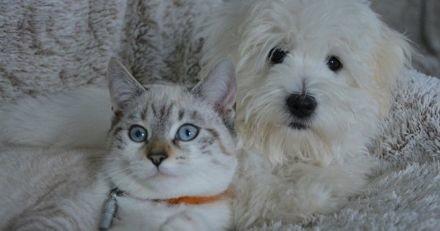 """Le """"certificat de connaissance"""" pour les futurs propriétaires d'animaux de compagnie a été validé par l'Assemblée"""