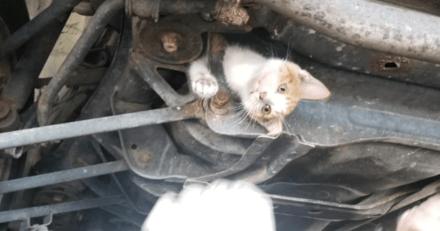 Il se précipite au garage : les mécaniciens sont sans voix quand ils démontent la voiture !
