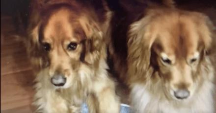 Ils partent en vacances et font garder leurs chiens : en voyant une photo, ils sautent dans le 1er avion !
