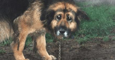 Ils enchainent leur chien dehors pendant 10 ans : au lieu d'être punis, ils reçoivent une proposition choquante