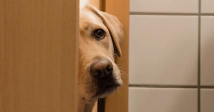 Mon chien me suit partout même dans la salle de bain : pourquoi fait-il ça?